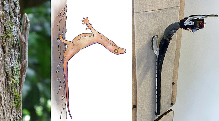 Gecko Like Tailed Robot
